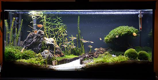 Aquaponie Dsc_6112