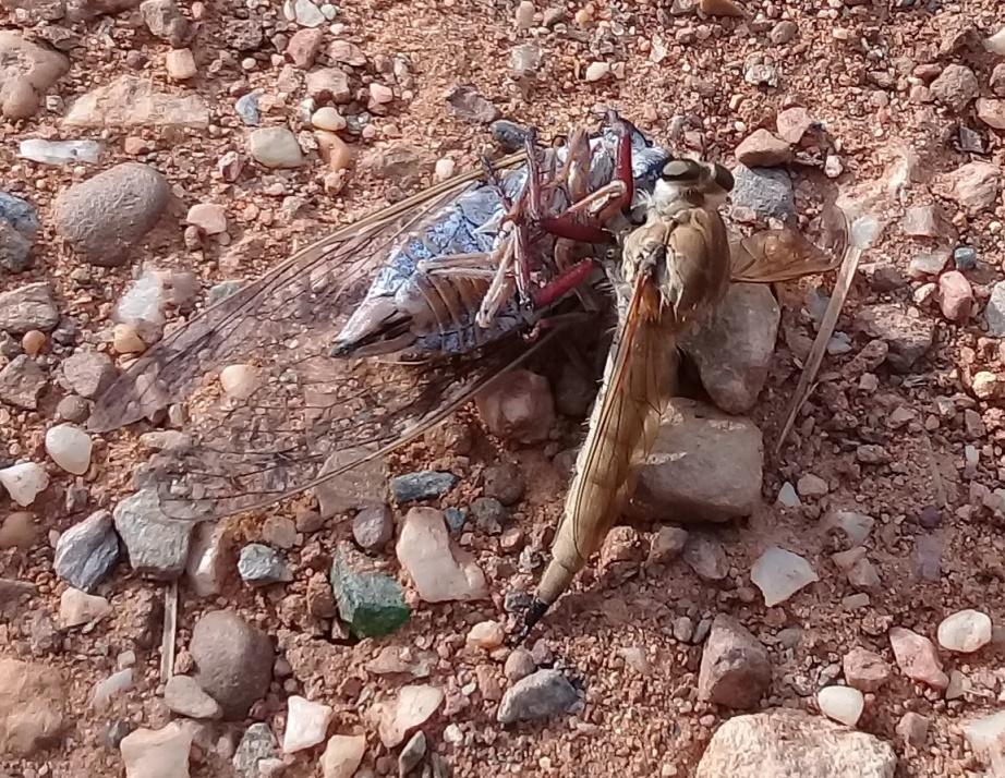 Une scène de chasse: foret de Bainem Algérie  1p10