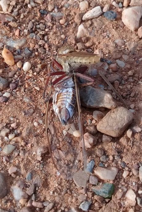 Une scène de chasse: foret de Bainem Algérie  20p10