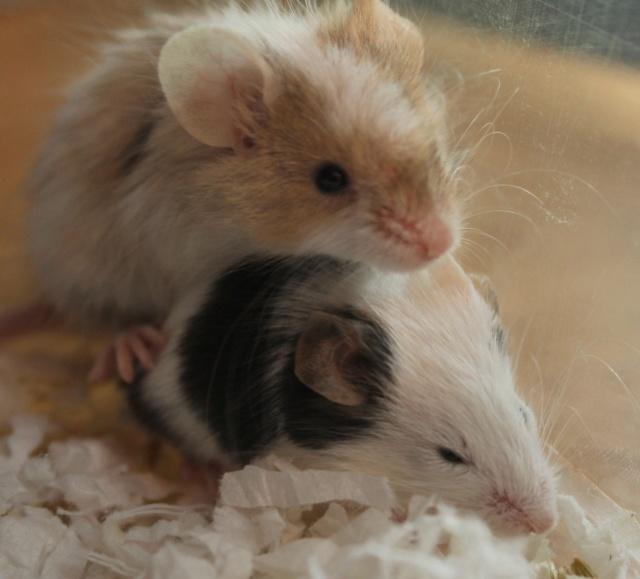 2 more new girls :) Img_7718