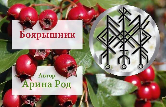"СТАВ ""БОЯРЫШНИК"" 9vdd0e10"