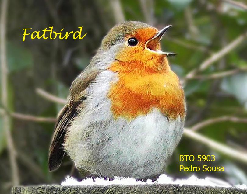 Tutoriais - Fatbird Fatbir10