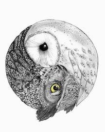 The Zen of Wu Wei Owl6910
