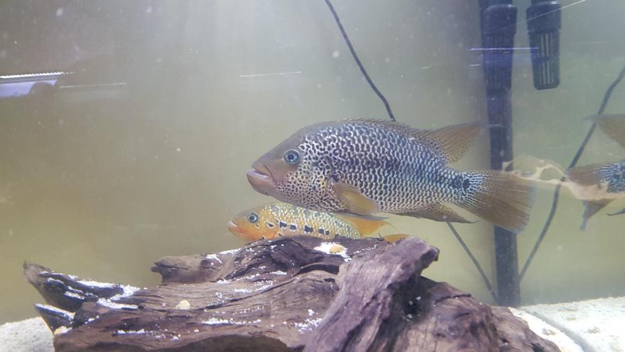 Ajout 60L - 300L - 540L - 1200L dans ma fishroom  20190710