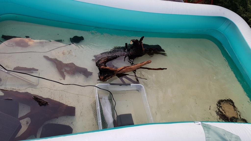 Ajout 60L - 300L - 540L - 1200L dans ma fishroom  20190720