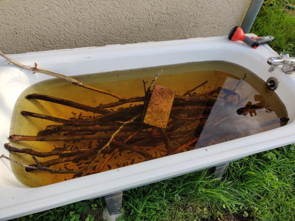 Ajout 60L - 300L - 540L - 1200L dans ma fishroom  Img_2020