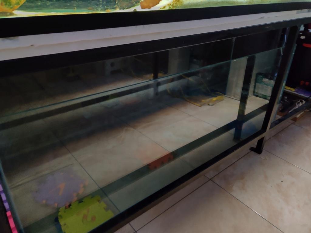Ajout 60L - 300L - 540L - 1200L dans ma fishroom  Img_2028