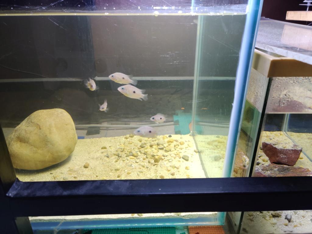 Ajout 60L - 300L - 540L - 1200L dans ma fishroom  Img_2034