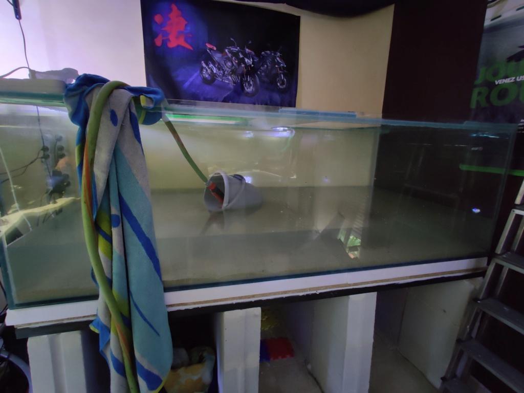 Ajout 60L - 300L - 540L - 1200L dans ma fishroom  - Page 2 Img_2048