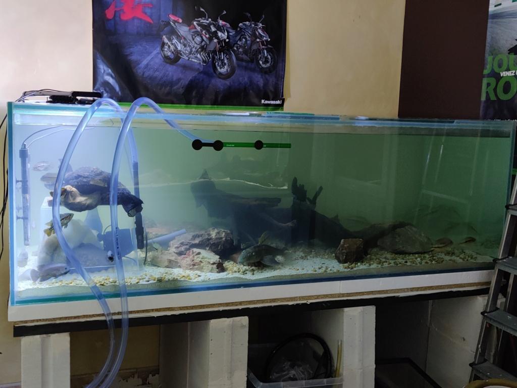 Ajout 60L - 300L - 540L - 1200L dans ma fishroom  - Page 2 Img_2050
