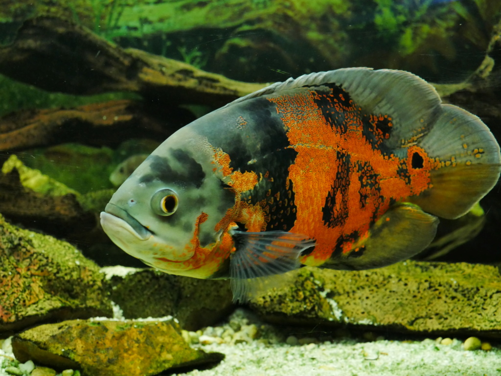 Recueil de photo aquariophiles de qualités P1000119