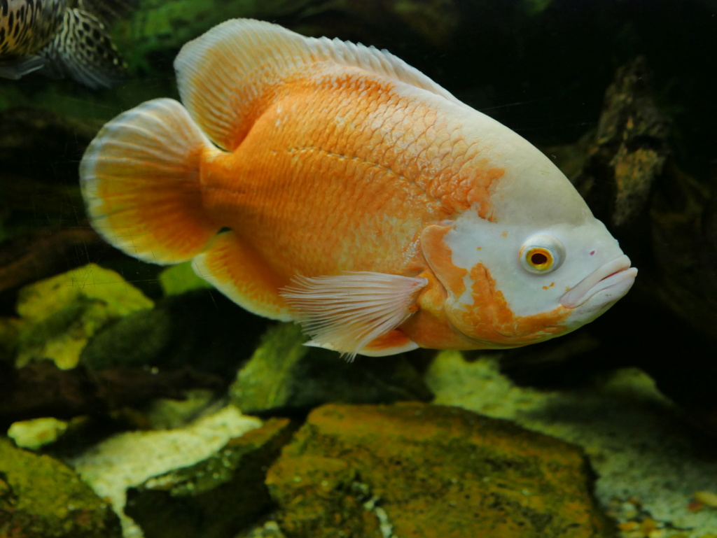 Recueil de photo aquariophiles de qualités P1000219