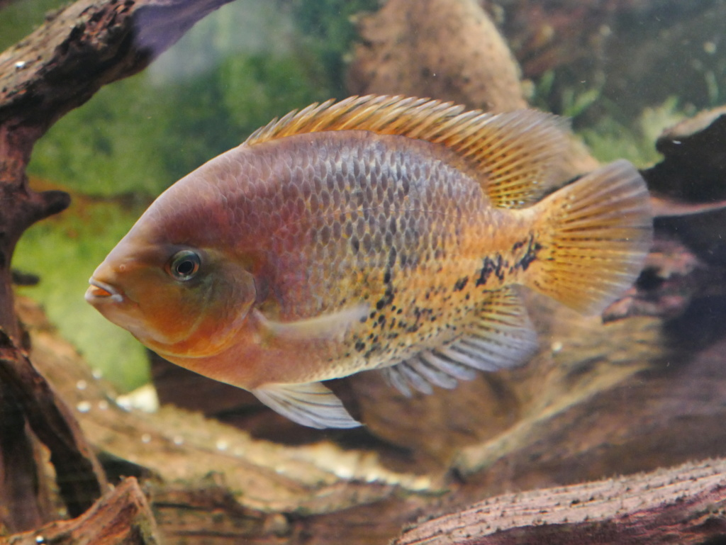 Recueil de photo aquariophiles de qualités P1000415