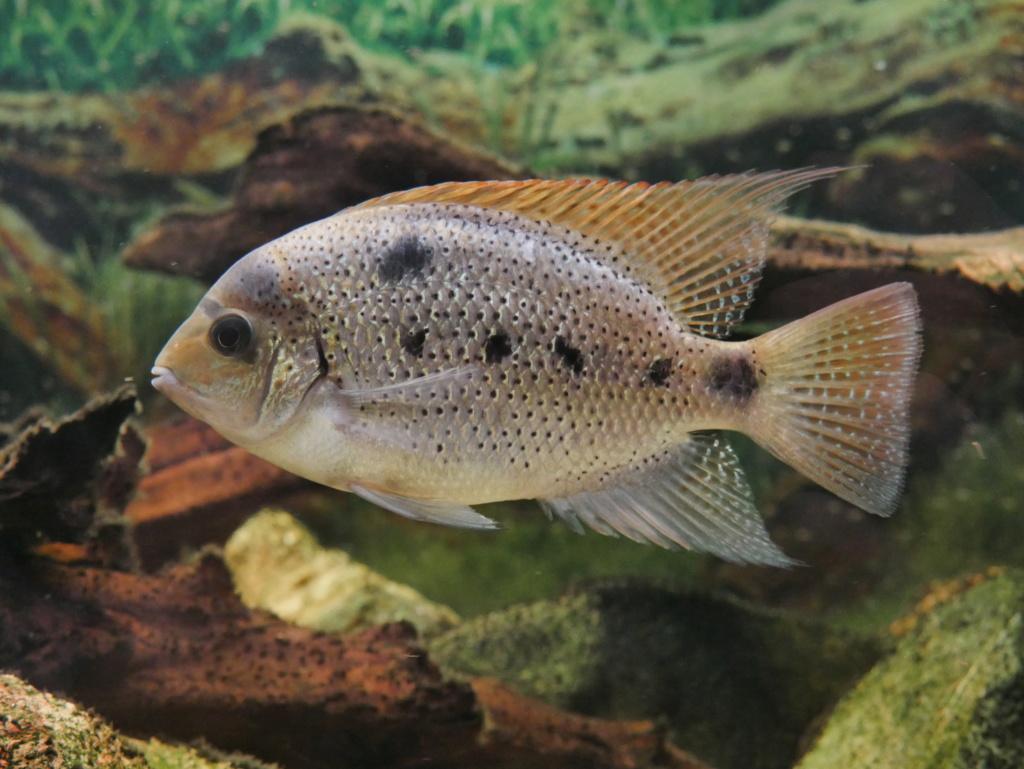 Recueil de photo aquariophiles de qualités P1000513