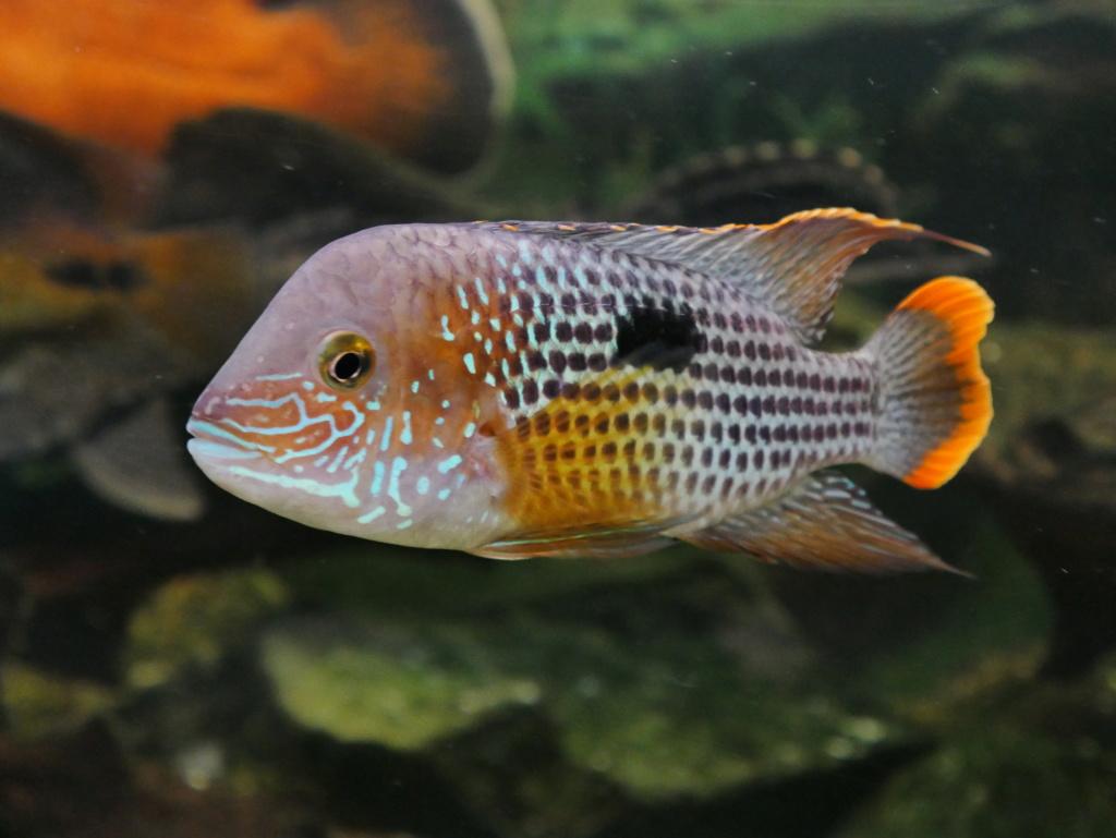 Recueil de photo aquariophiles de qualités P1000810