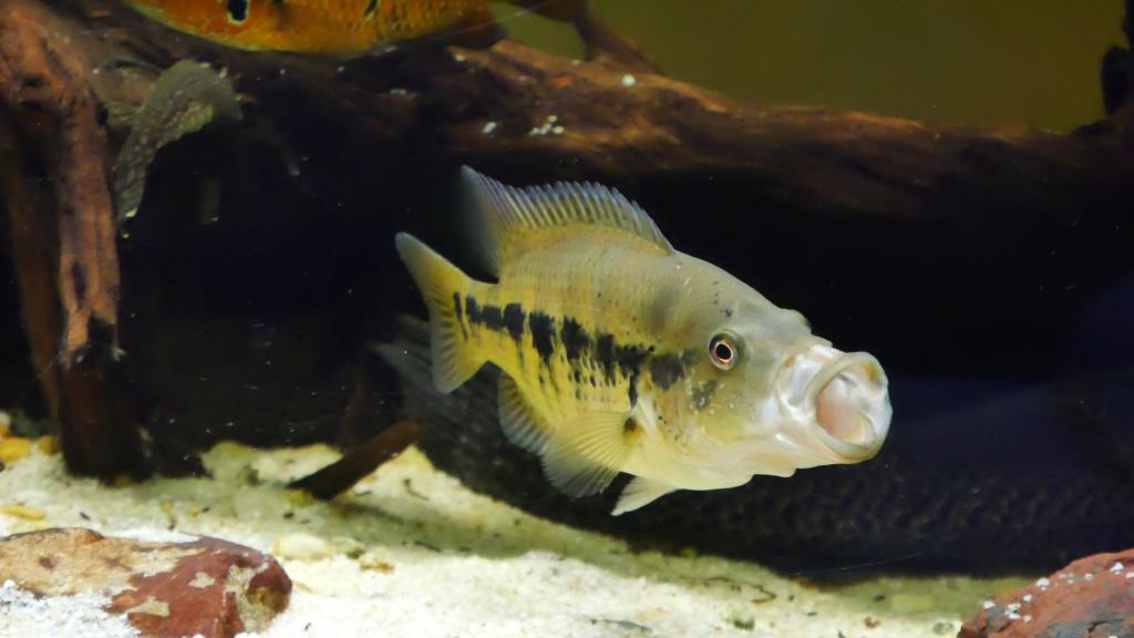 Recueil de photo aquariophiles de qualités Vlcsna14