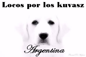 Locos por los Kuvasz Argentina 35298637