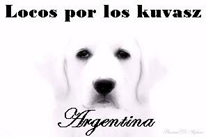 Locos por los Kuvasz Argentina 35298655