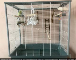 Et soudain... une nouvelle perruche! Cage_110