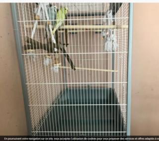 Et soudain... une nouvelle perruche! Cage_210