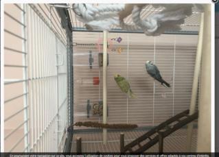 Et soudain... une nouvelle perruche! Cage_310