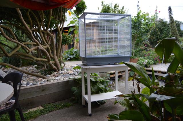 Nouvelle cage... Dsc_0319