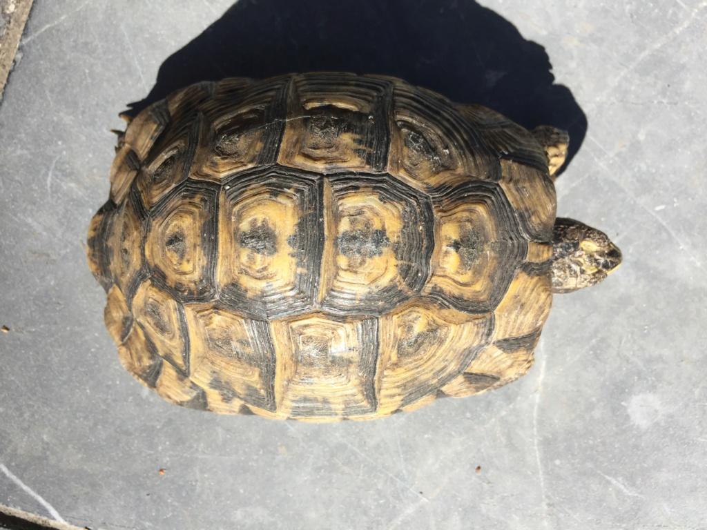 identification Graeca Dossie10