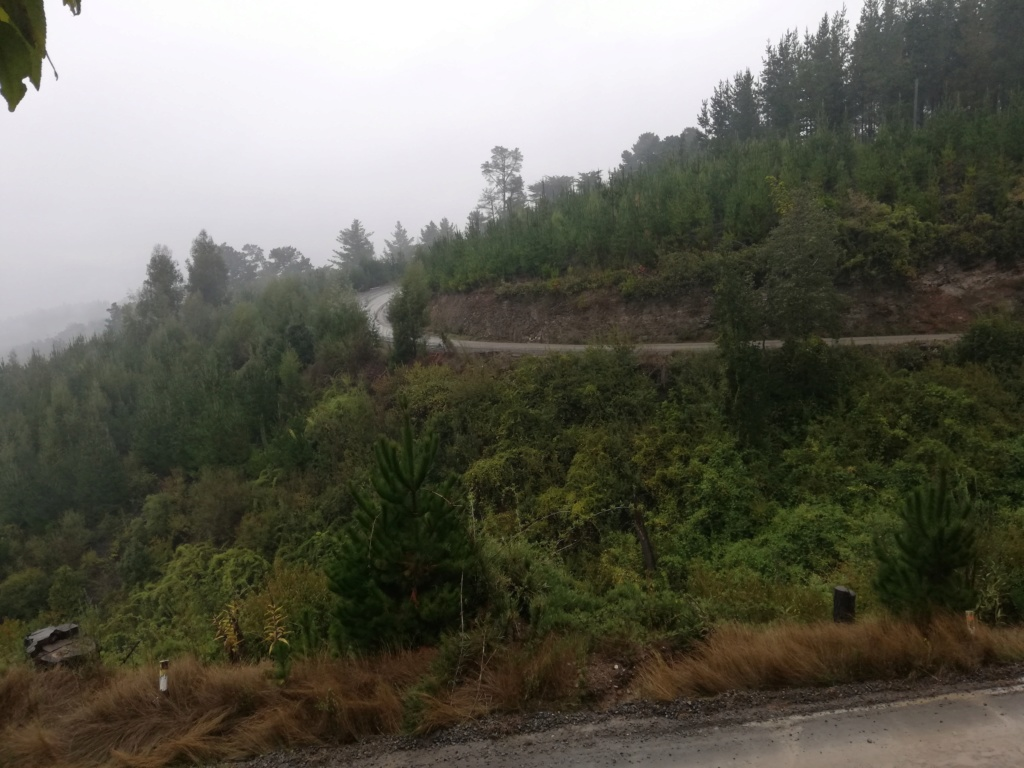 WRC: COPEC Rallye Chile [9-12 Mayo] - Página 2 Img_2017