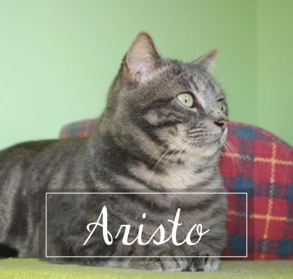 ARISTO - Page 2 20190411