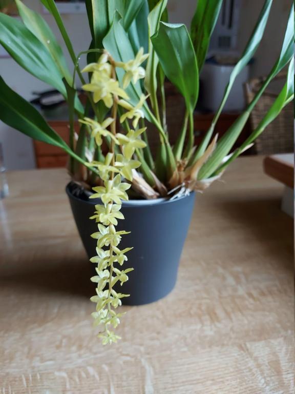 Orchideen 3 (fortlaufende Seiten 300 bis 400) - Seite 74 20200627