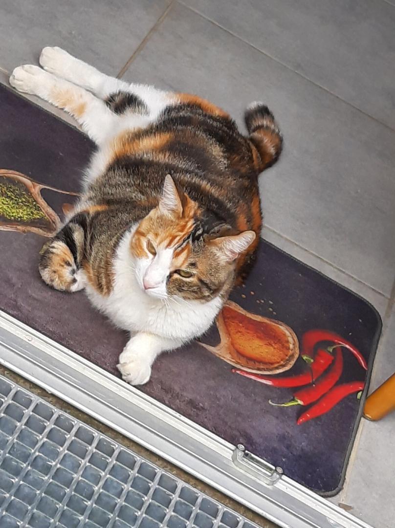 perdu chatte tricolore quartier fenassiers Whatsa66