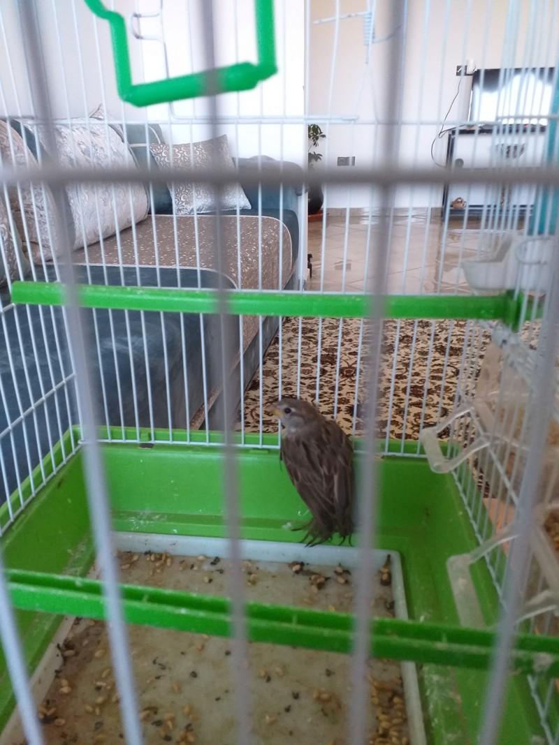 Forum oiseaux de la nature et sauvages: Nos p'tits copains à plume - Portail 20190510