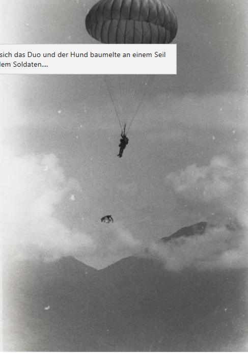 Chiens parachutistes avec dorsal ? Ch310