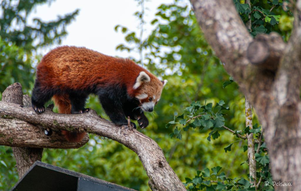 Zoos / Parcs animaliers - Page 29 Imgp1510
