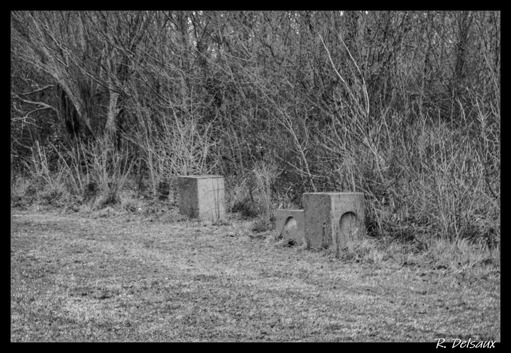 Noir et Blanc / Sépia / Désaturation partielle / Traitements divers - Page 11 Imgp4817