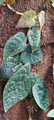 Terrarium 1250x700x900 en bloc de tourbe SOFT 100% naturel - Page 4 1_1310