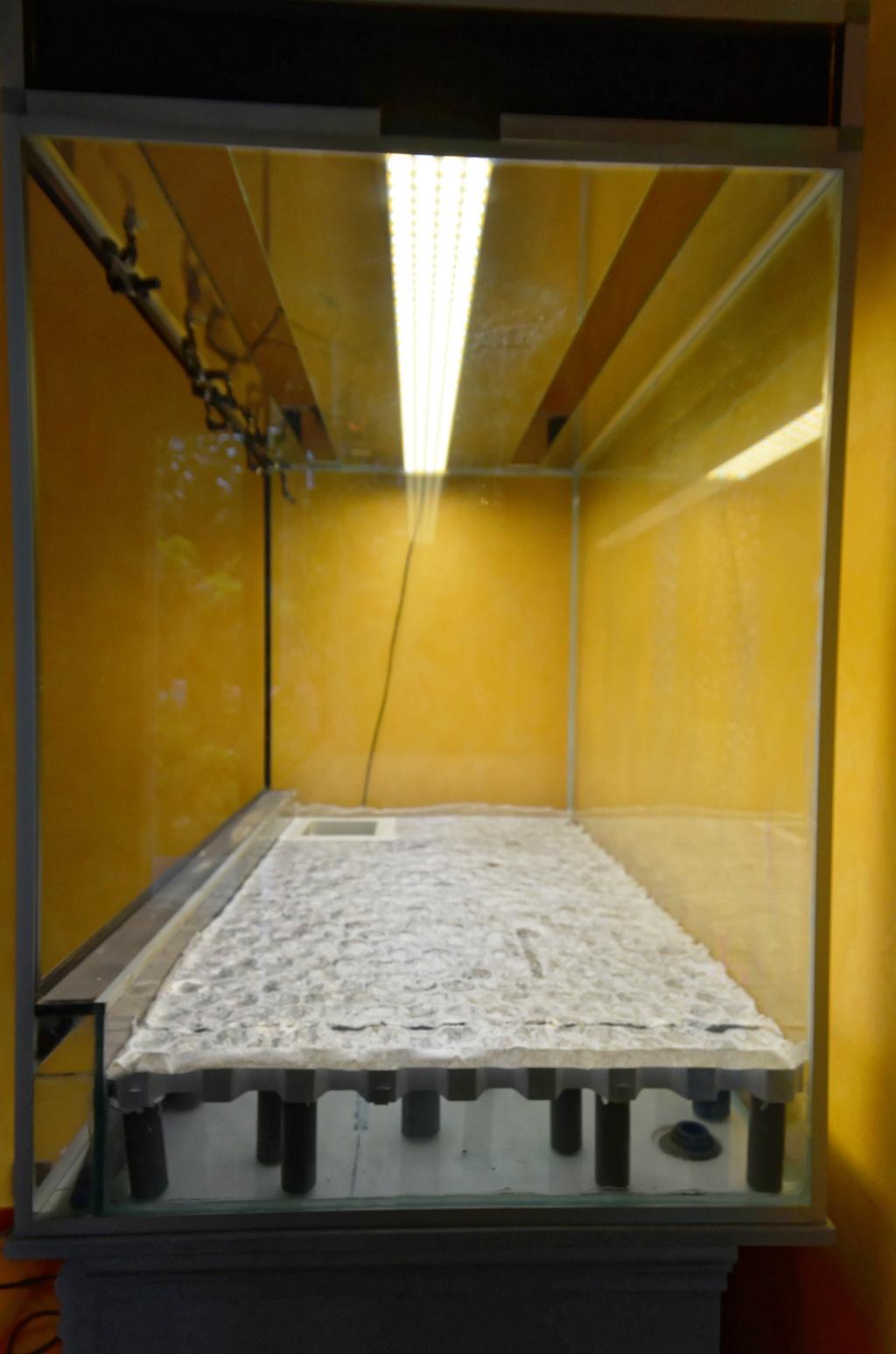 Terrarium 1250x700x900 en bloc de tourbe SOFT 100% naturel - Page 4 Dsc_6412