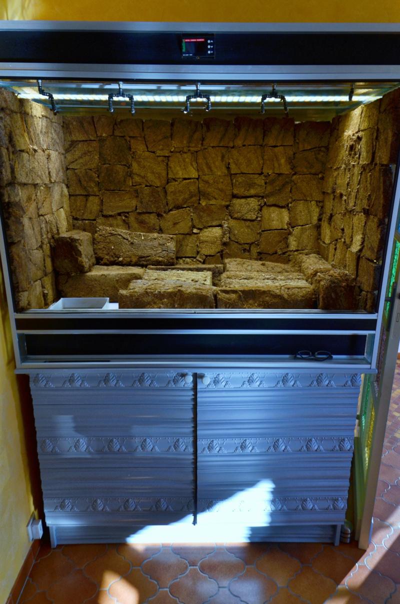 Terrarium 1250x700x900 en bloc de tourbe SOFT 100% naturel - Page 4 Dsc_6619
