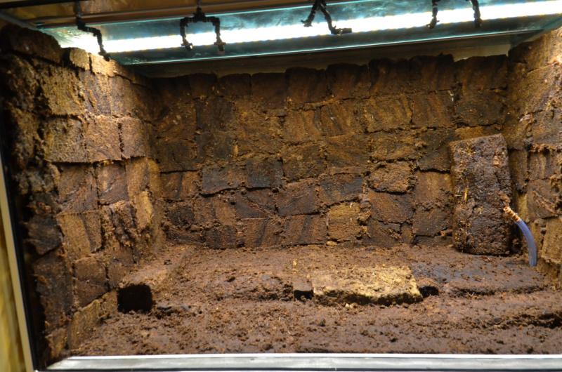 Terrarium 1250x700x900 en bloc de tourbe SOFT 100% naturel - Page 4 Dsc_6621