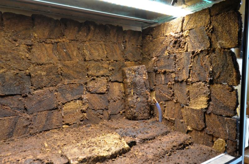 Terrarium 1250x700x900 en bloc de tourbe SOFT 100% naturel - Page 4 Dsc_6623