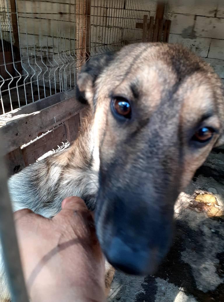 aden - ADEN, né en 2015 ,  trouvé attaché à la grille du refuge-R-SC-SOS 11958510