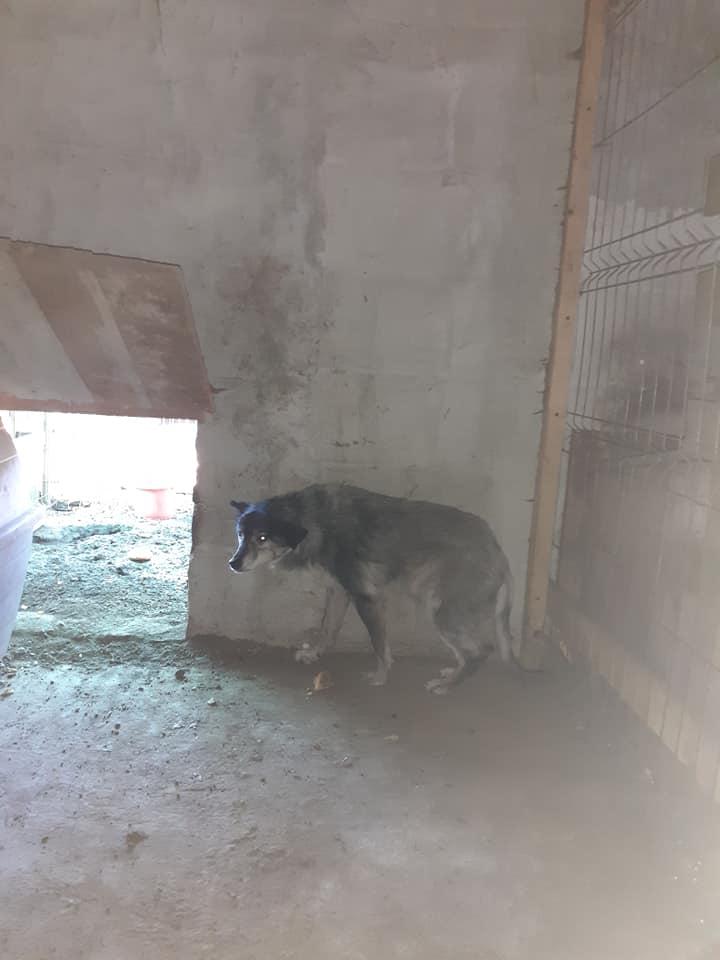 grizie - GRIZIE - Taille moyenne - Femelle née le 10/08/2009 EN FA DANS LE 28 - Marrainée par Sabfly -R-SC- SOS 12133113