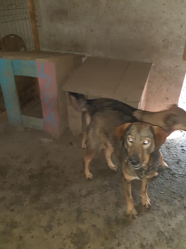 OUZO, né en sept 2017,  croisé berger, frère de Taliya et Nami, trouvé dans la rue en mai 2018 - Parrainé par Viviane -R- - Page 2 12146311