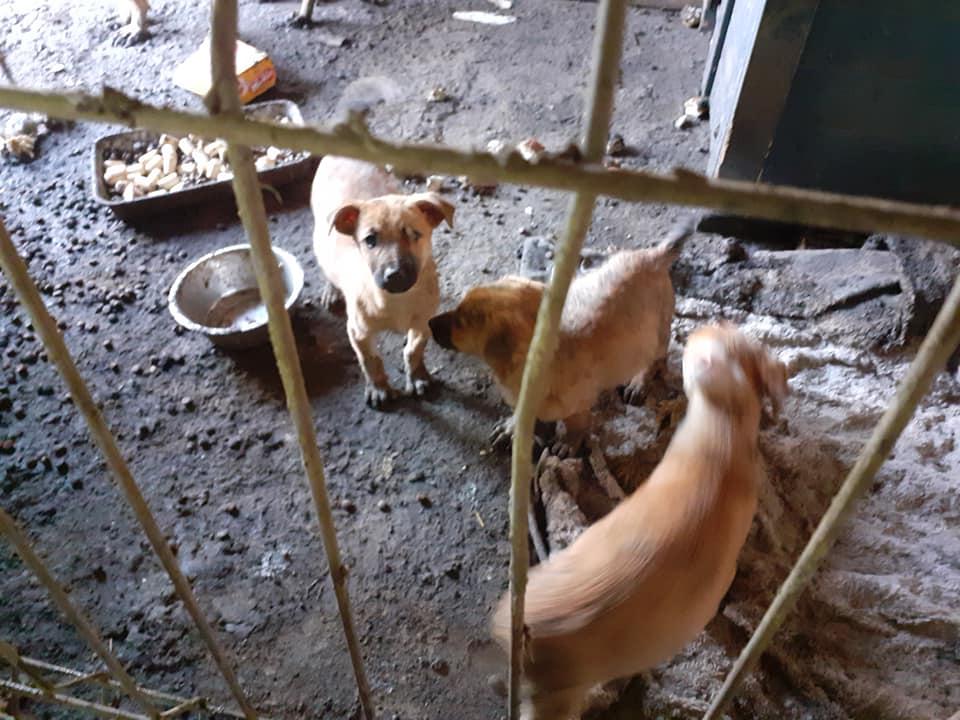 Manisha - MANISHA née en 2018 - maman et ses 3 chiots sauvés de Mihailesti le 20/08/2020 - parrrainée par Coco65-R-SC-SOS 12147610