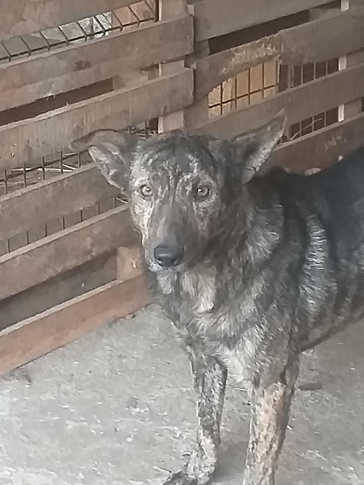 ARRY, mâle né en 2013, récupéré suite à l'avis d'expulsion du refuge de Radu- marrainé par Bouffy-R-SC-SOS 12253310