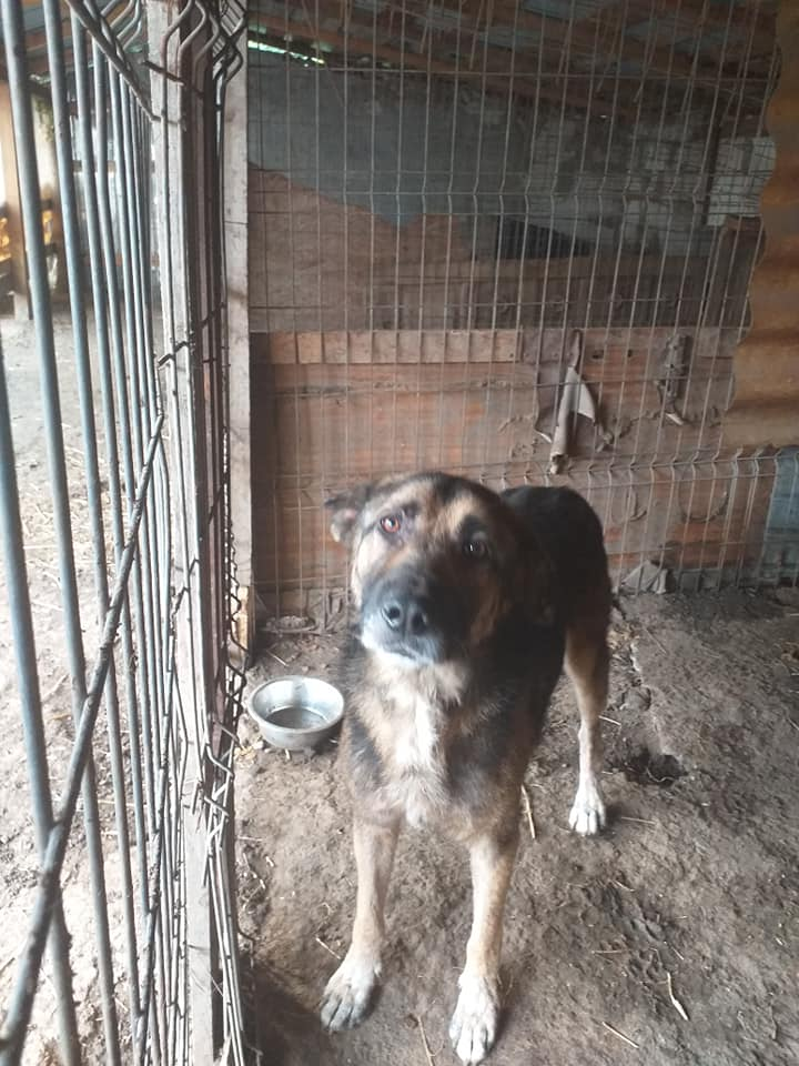 aden - ADEN, né en 2015 ,  trouvé attaché à la grille du refuge-R-SC-SOS 12276112