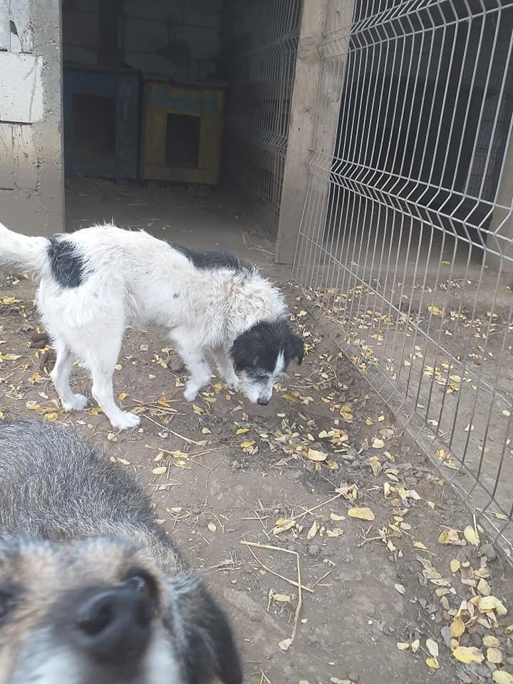 MACUMBA -type petit griffon née en 2010 - marrainée par Yemtsi - R- SOS-SC - Page 4 12281110