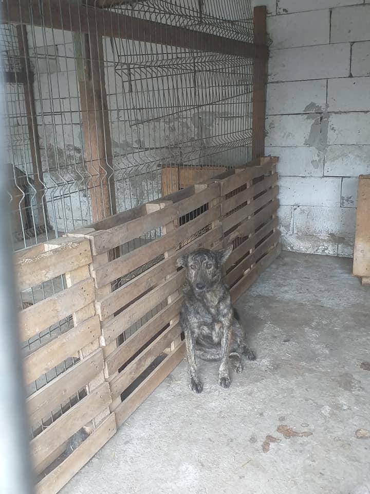 ARRY, mâle né en 2013, récupéré suite à l'avis d'expulsion du refuge de Radu- marrainé par Bouffy-R-SC-SOS 12281310