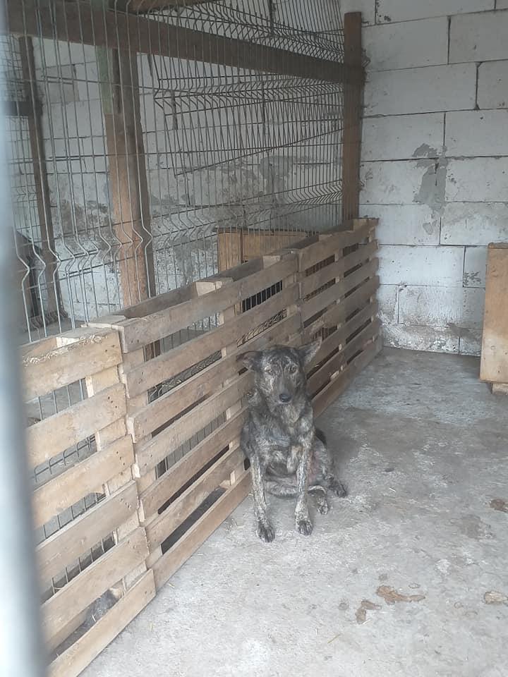ARRY, mâle né en 2013, récupéré suite à l'avis d'expulsion du refuge de Radu- marrainé par Bouffy-R-SC-SOS 12282910