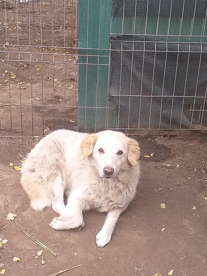 BALANUCH, mâle croisé berger sauvé de Pallady, né en 2009 parrainé par Nathalie G. -Gage Coeur  Myri_Bonnie-SC-R-SOS- - Page 3 12284210